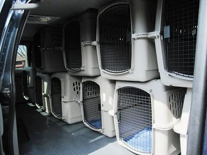 Inside Measurements 134 Long By 50 54 Tall Ac Vents Reduce Height In Some Spots This Size Van Will Comfortably Hold 5 Cages Lower And 4 Upper